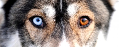 Dog's Eyes - photo - Russell Cheyne