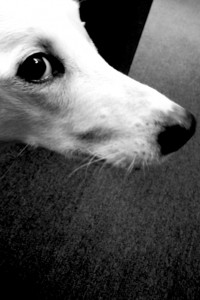 Eddie the Dog - photo - Rob Vandermark