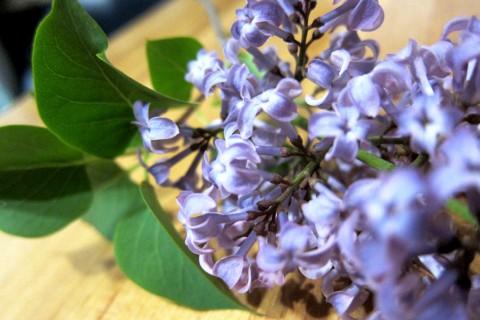 Smell of Spring - photo - Rob Vandermark